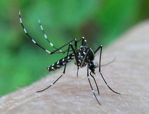 Dezanzarizzazione - prevenzione Chikungunya: lotta alla zanzara tigre