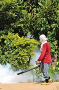 Dezanzarizzazione e disinfestazione zanzara tigre