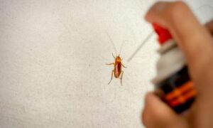 Disinfestazione scarafaggi  Garlasco